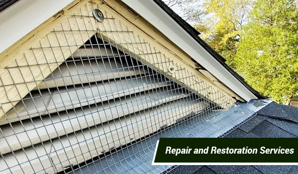 animal repair restoration services in Massachusetts