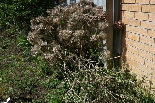 clearing bushes around house to prevent animals